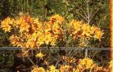 'Indian Spring'