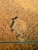 Sand quarry, Dubai