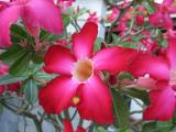 beautifull colors
