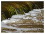 Swampwater beautiful