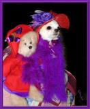 Ladies Red Hat Society