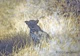 leopard-35.jpg
