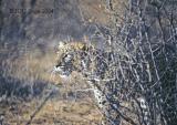 leopard-39.jpg