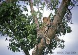 leopard-102.jpg