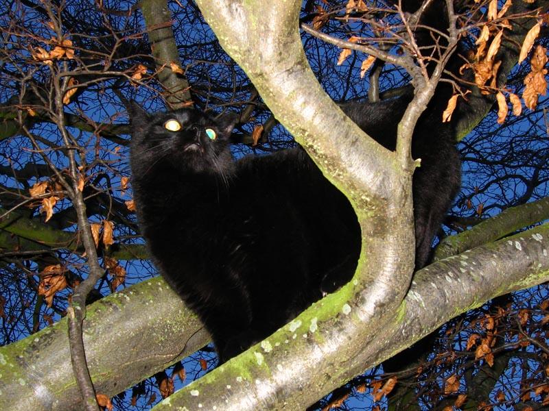 Jasper up Tree