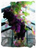grapes--.jpg