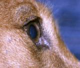 eye (*)