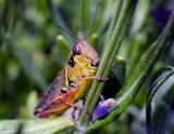 grasshopper4949.jpg