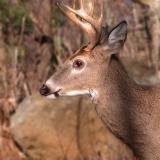 11/26/04 - 6 Point Buck