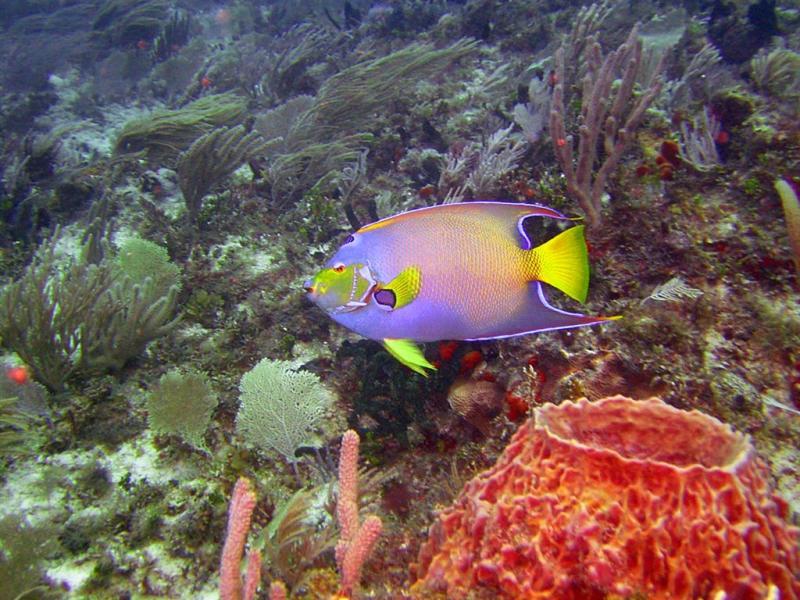10 meter reef 181a