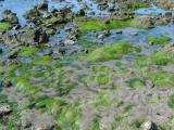 Swirling Algae