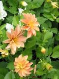 Flesh Colored Flower