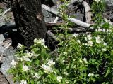 Wildflowers by Dead Wood