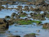 Rocks and Algae