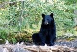 bear-a.jpg