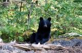 bear-d.jpg