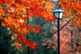 Fall colors - Skinner  Butte Park
