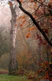 Snag in foggy park