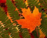 leaf_Image037_p.jpg