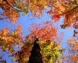 leaves_tree_Image031_p.jpg
