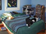 Sunday OCTOBER 10 2004: cats on the bed / Spike, Dashigara, Mallet