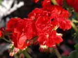 Blossom Tangle