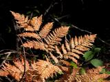October Frond