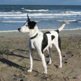 Joop's Dog Log - Thursday Nov 04