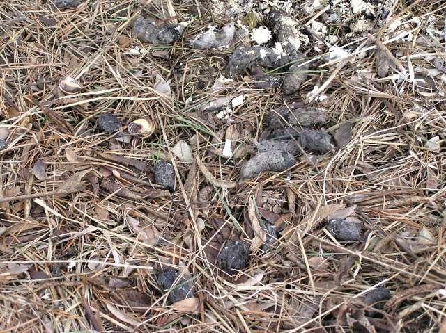 NSWO pellets