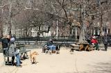 Dog Runs - Washington Square Park