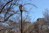 Union Square - North View