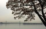 Throgs Neck Bridge from the US Merchant Marine Academy