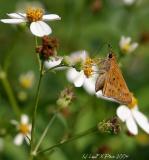 Moth Alights.jpg