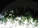 leaves, antigua, guatemala