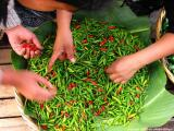 peppers at the market, antigua, guatemala