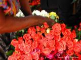 roses, antigua, guatemala