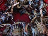 crabs, san lucas toliman, guatemala