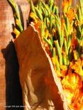 gladiolas, antigua, guatemala