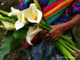 callas, antigua, guatemala