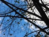 11.09.04 tree and sky