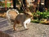 11.13.04 squirrel