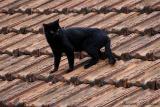 Home's roof - No telhado de casa