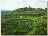 A small hilltown surrounded by olive groves