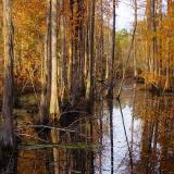 Late Autumn in the Swamp