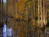 Late Autumn in the Swamp2