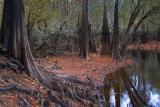 Waccamaw Riverbank