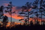Mollie Sunset5