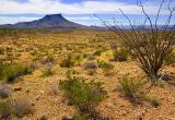 Chihuahuan Desert 7457