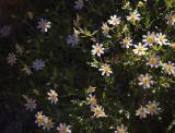 Desert Flora 7404