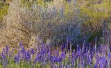 Desert Flora 7346
